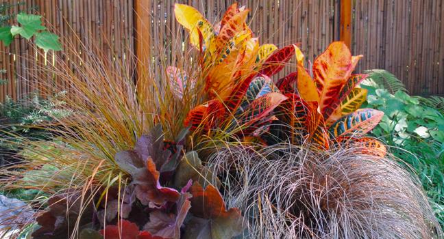 Un jardin coloré et attrayant jusqu'en décembre