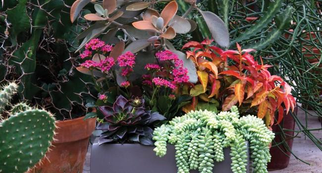 Des plantes sans entretien… ou presque !