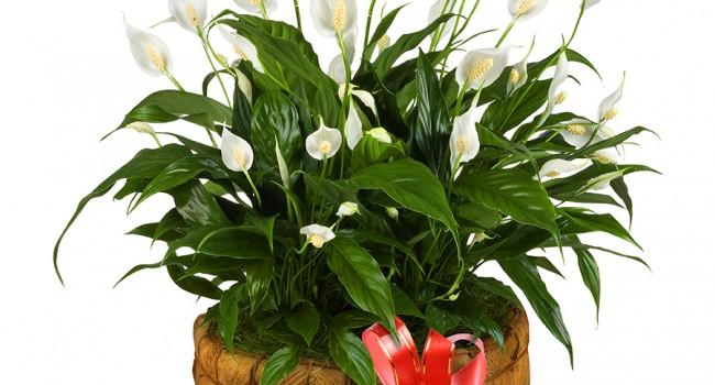 Plantes indestructibles pour jardiniers nuls