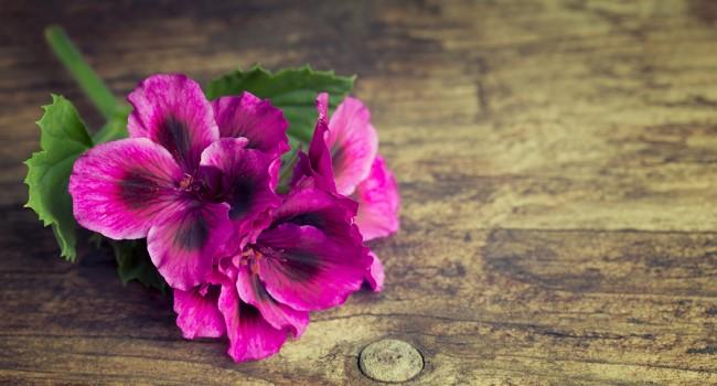 Des plantes indestructibles qui poussent dans les pires conditions
