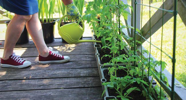 Jardinage de balcon en 5 leçons