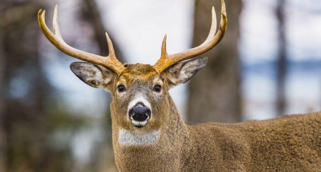 Histoire de chasse intergénérationnelle à Anticosti