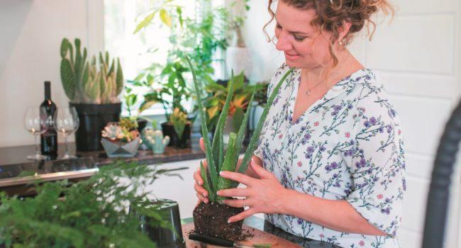 Plantes vertespour les nuls