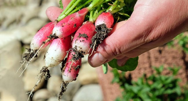 Jardiniers, récoltez de bons conseils!